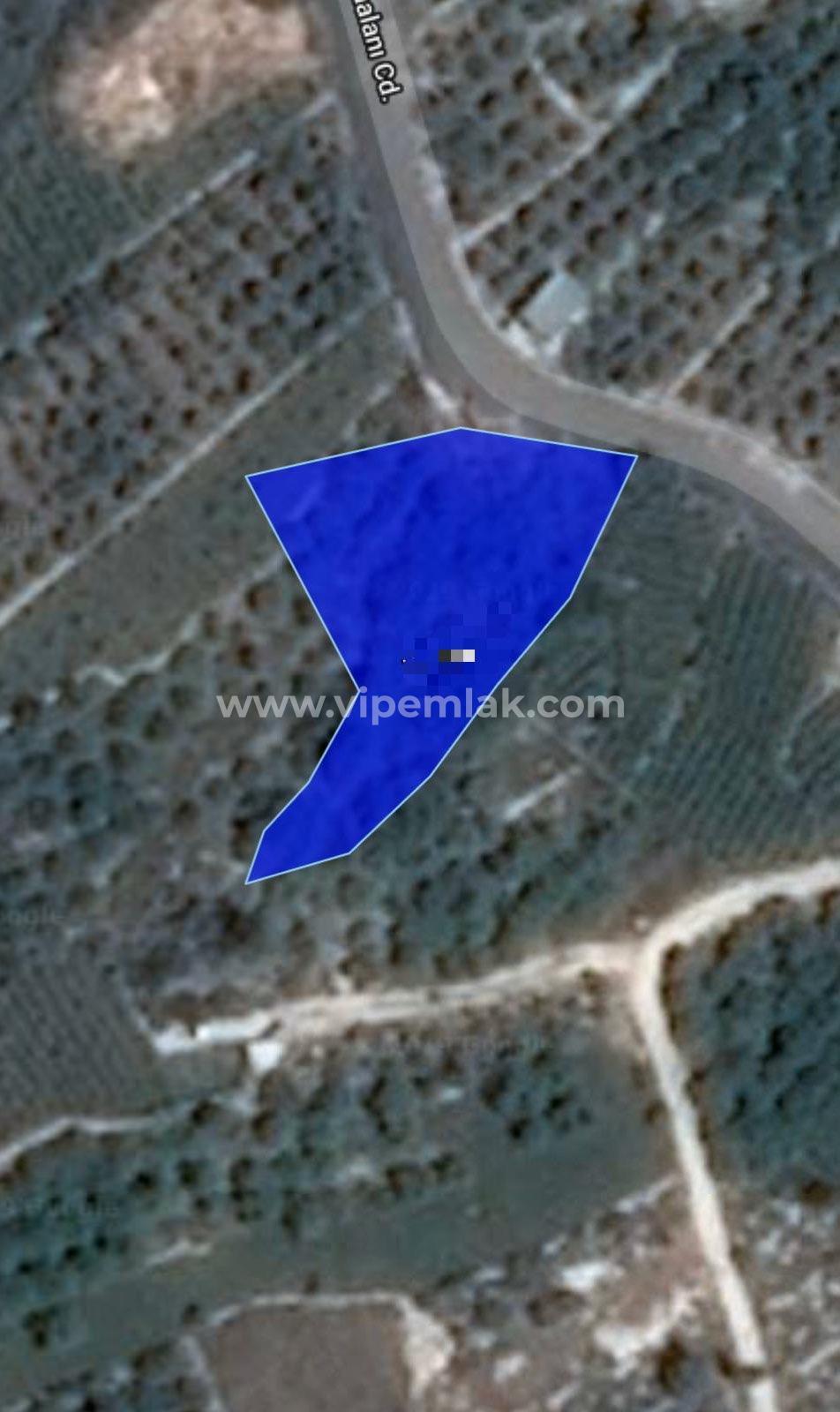 Erdemli Tırtar'da 1260m2 Satılık Kelepir Fiyatta Tarla