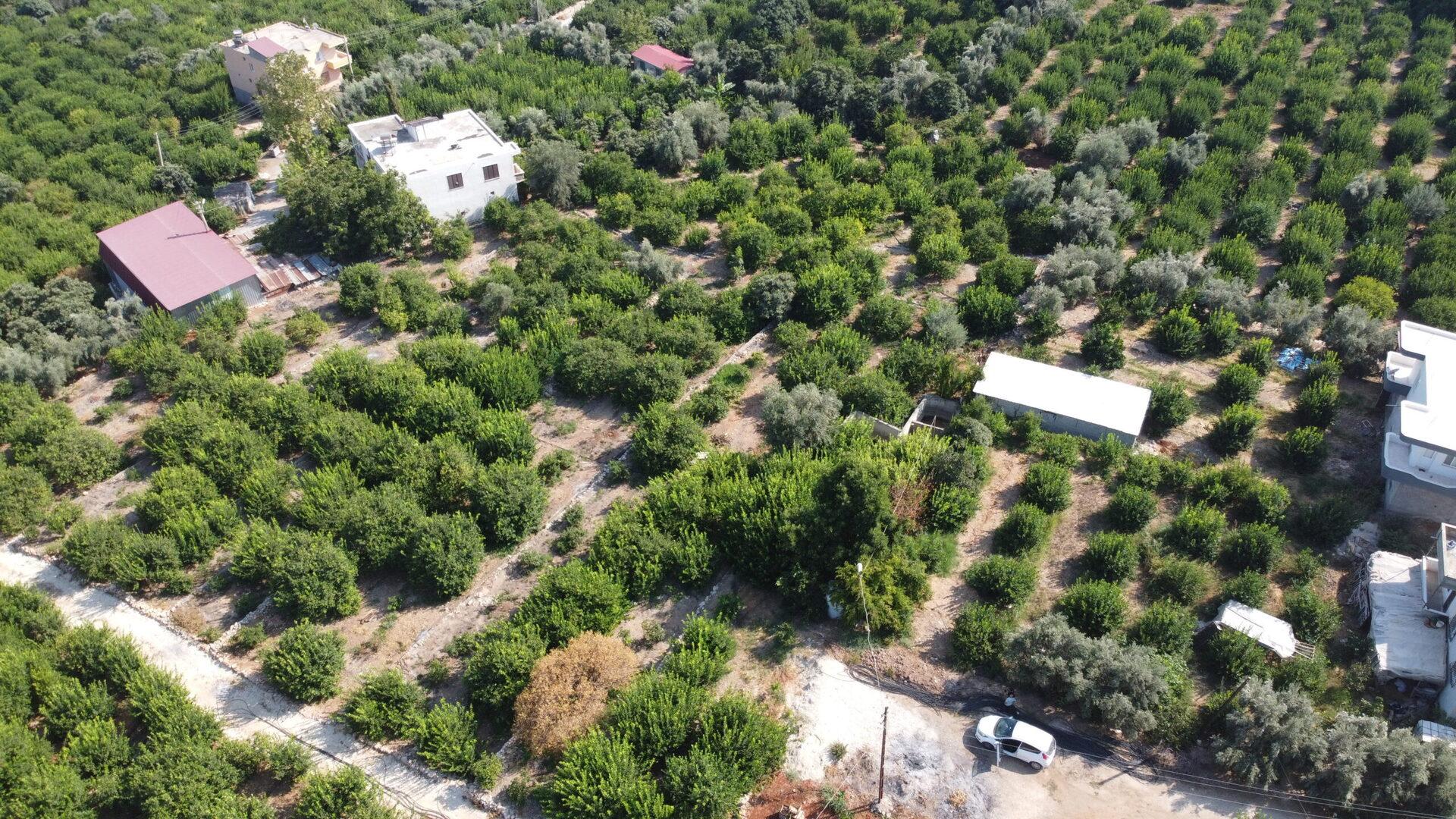 Mersin Erdemli Satılık Limon Bahçesi